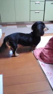 ララ母の犬バカ日記-120529_2057~030001.jpg
