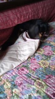 ララ母の犬バカ日記-120530_0730~040001.jpg