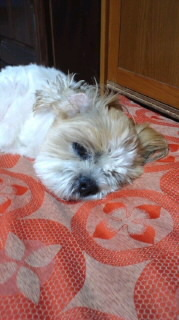 ララ母の犬バカ日記-120531_2010~010001.jpg