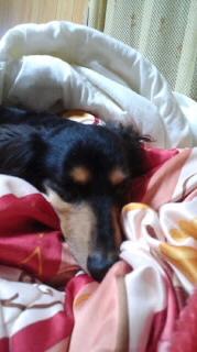 ララ母の犬バカ日記-120604_2037~010001.jpg