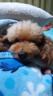 ララ母の犬バカ日記-120604_2037~020001.jpg