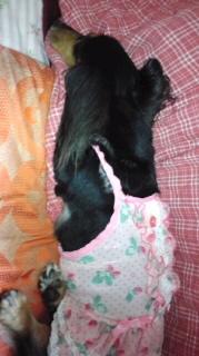 ララ母の犬バカ日記-120608_2057~010001.jpg