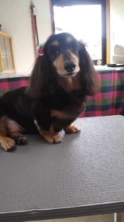 ララ母の犬バカ日記-120609_1143~010001.jpg