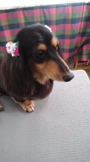 ララ母の犬バカ日記-120609_1144~020001.jpg
