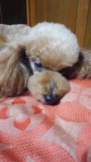 ララ母の犬バカ日記-120615_1901~010001.jpg