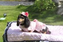 ララ母の犬バカDiary