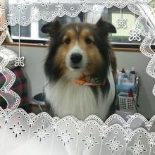 ララ母の犬バカDiary-1360414369610.jpg