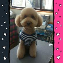 ララ母の犬バカDiary-1360414521401.jpg