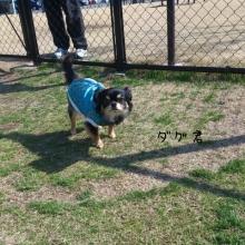 ララ母の犬バカDiary-1360494205151.jpg