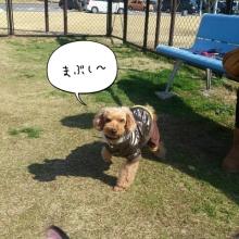 ララ母の犬バカDiary-1360494230254.jpg