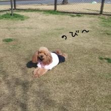 ララ母の犬バカDiary-1360494238076.jpg