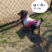 ララ母の犬バカDiary-1360494247755.jpg