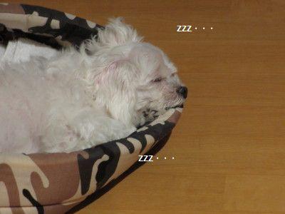 IMG_0303_1っずううう20012