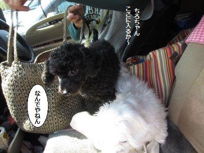 IMG_0009_1tirokoko20045dddd0124.jpg
