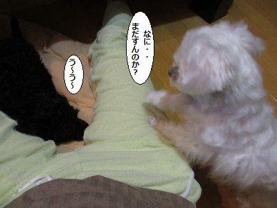 IMG_0076_1madasuruu20089ss001.jpg