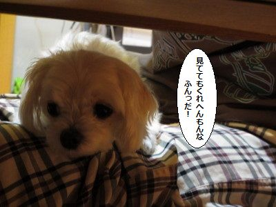 IMG_0220_1hunnmi20055s8099.jpg