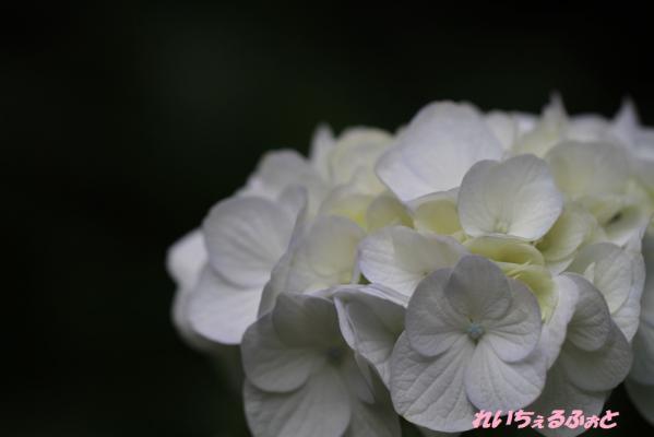 DPP_1394.jpg