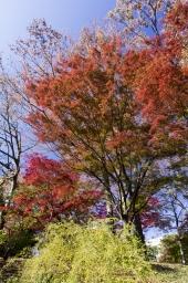 秋はこの色に限る