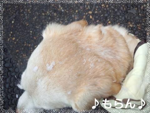 120204 雪降る立春-2
