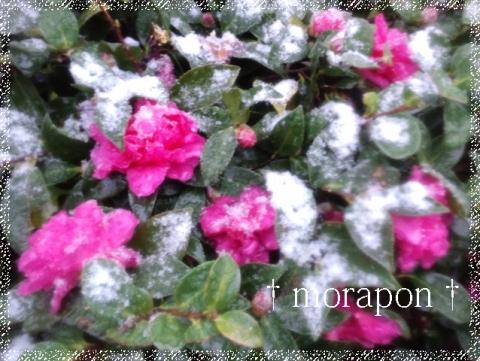 120204 雪降る立春-5