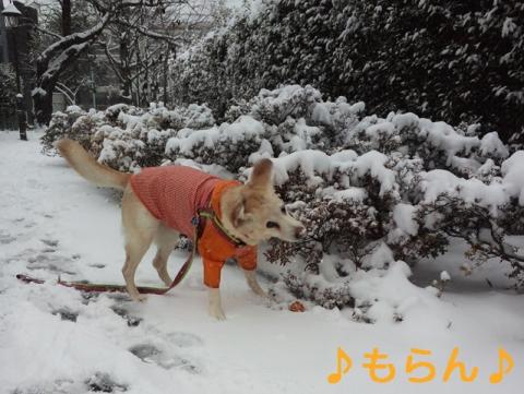 140208 本日は大雪なり-2