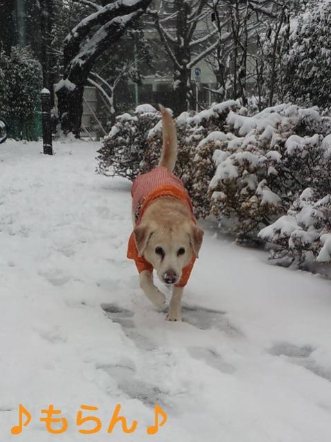 140208 本日は大雪なり-3