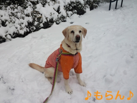 140208 本日は大雪なり-4