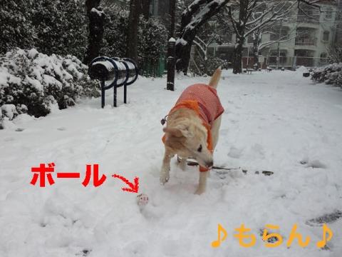 140208 本日は大雪なり-5