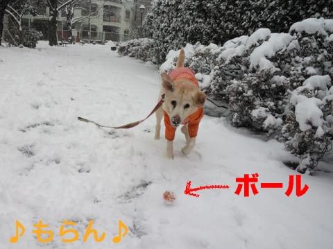 140208 本日は大雪なり-6
