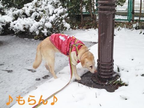 140214 雪散歩-1