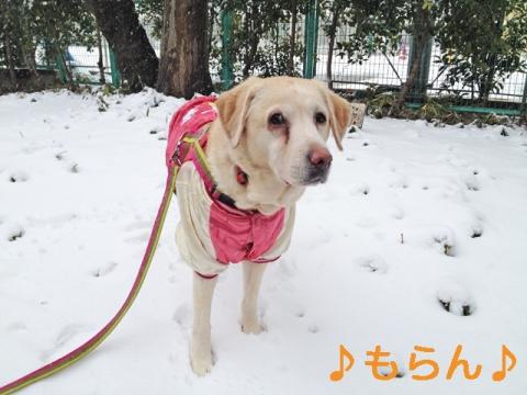 140214 雪散歩-2