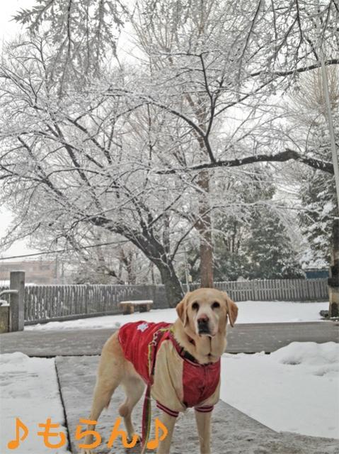 140214 雪散歩-3