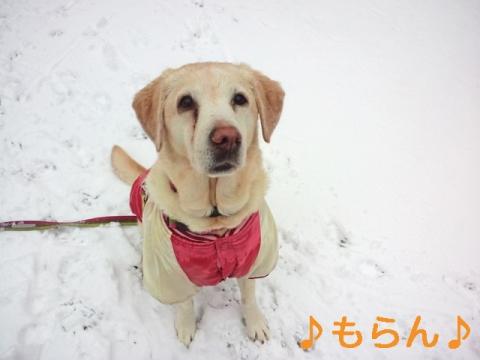 140214 雪散歩-4