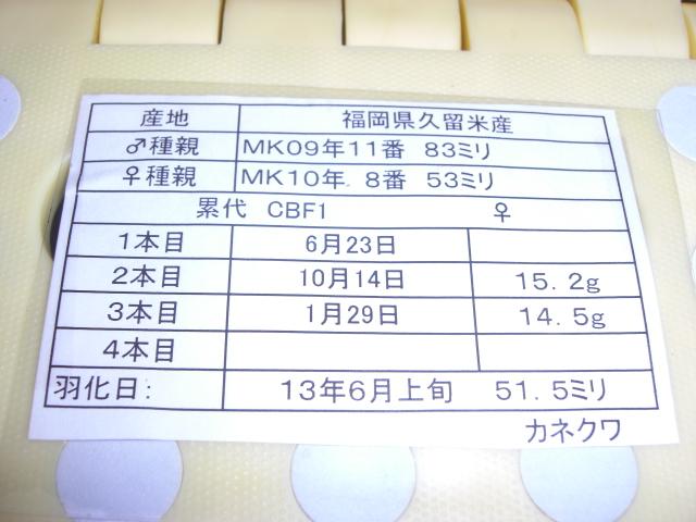 カネ863515