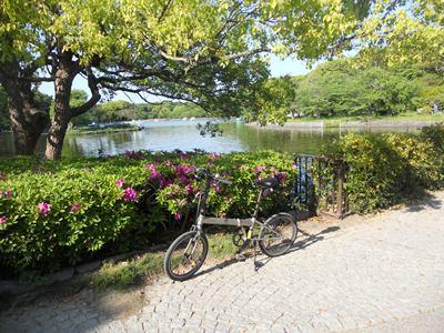新緑観賞明石公園剛の池
