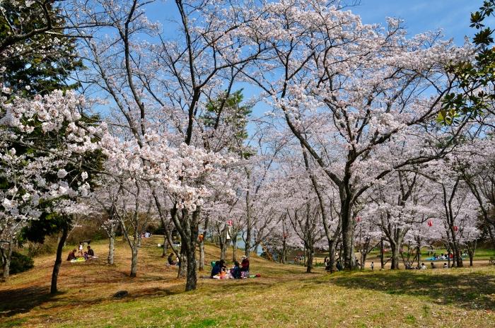 萩尾公園 (1)