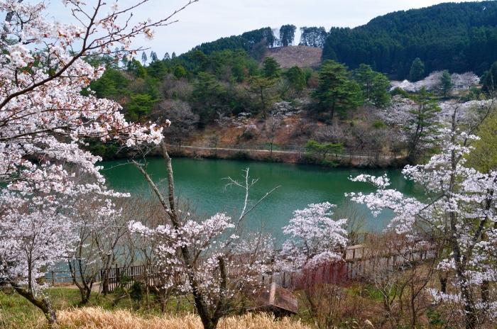 萩尾公園 (10)
