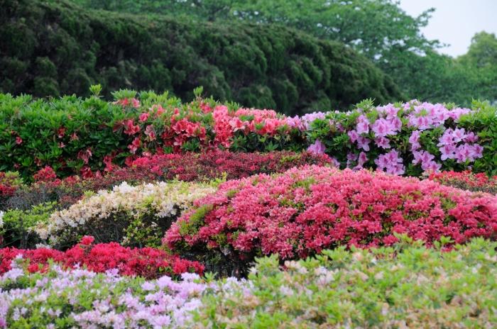 久留米百年公園 (5)