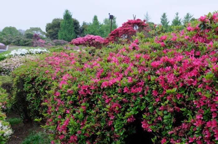 久留米百年公園 (3)