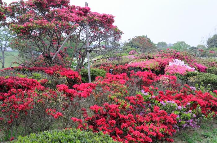 久留米百年公園 (2)