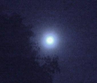 仲秋の名月2
