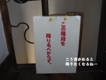 P1180569(1).jpg