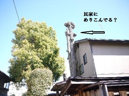 P1180628(1).jpg