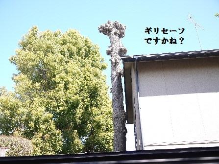 P1180630(1).jpg