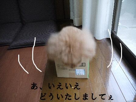 P1190442(1).jpg