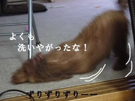 P1190887(1).jpg
