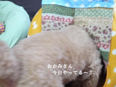 P1200315(1).jpg