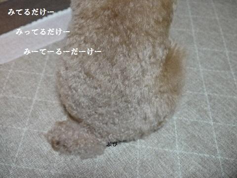 P1220478(1).jpg