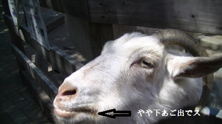 PIC_0253(1).jpg