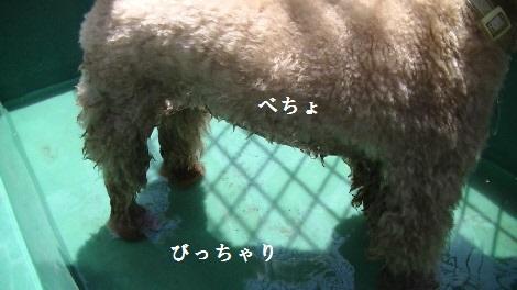 PIC_0432(1).jpg